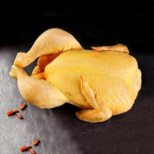 Κόκορας Ιταλίας Amadori